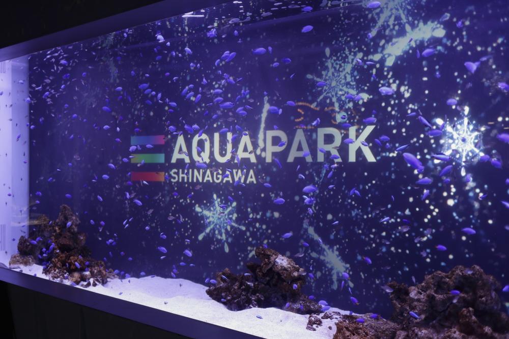 アクアパーク品川 20170104